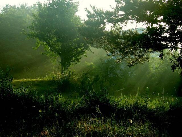Лес в солнечных лучах