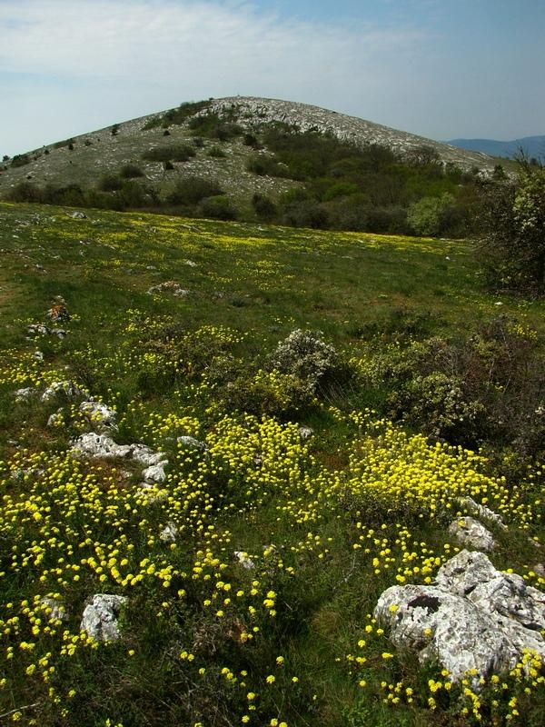 Цветы у Ильяс-каи