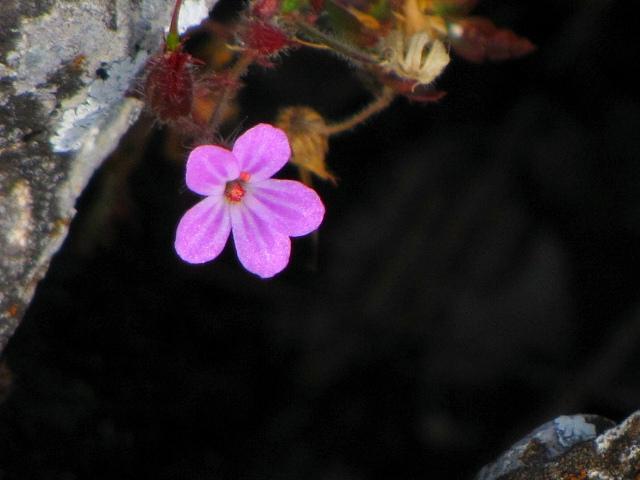 Цветок у входа в пещеру