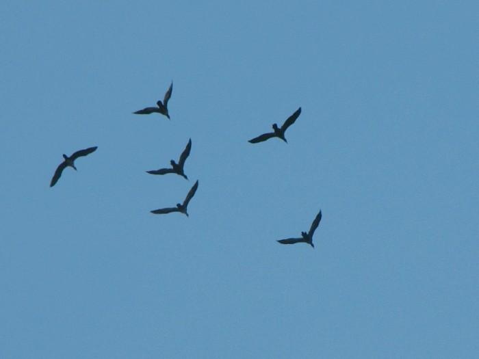 Летяяять утки!... или гуси?